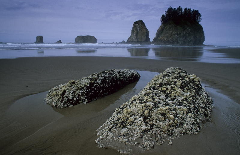 Pacific Coast, Olympic National Park