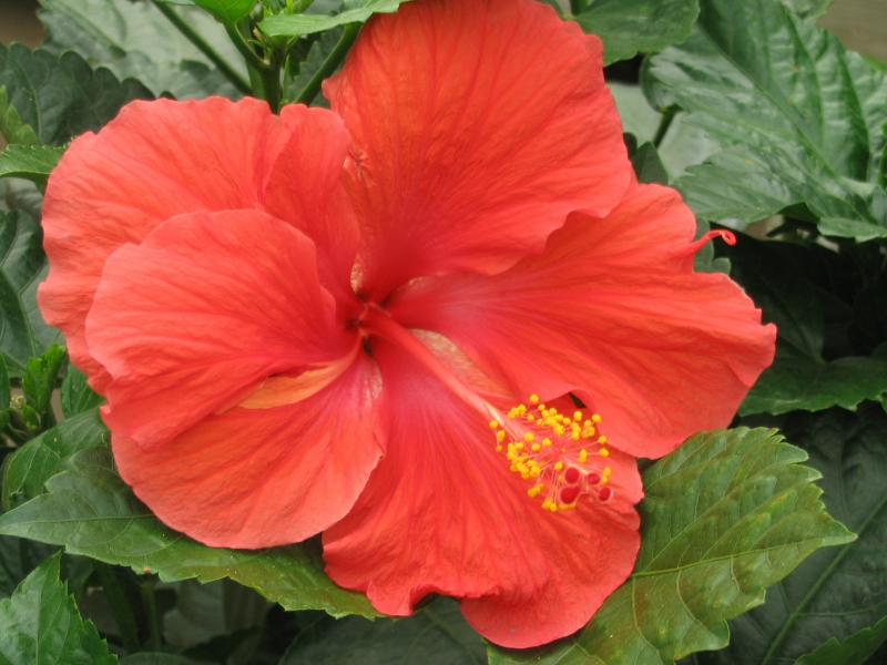 Reddish-pink Flower