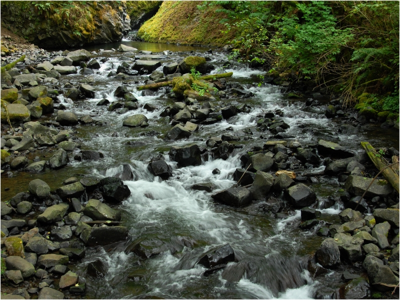 Feeder Creek For Columbia River