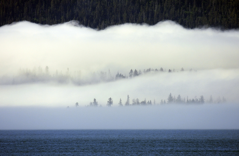 Foggy Forest Layers