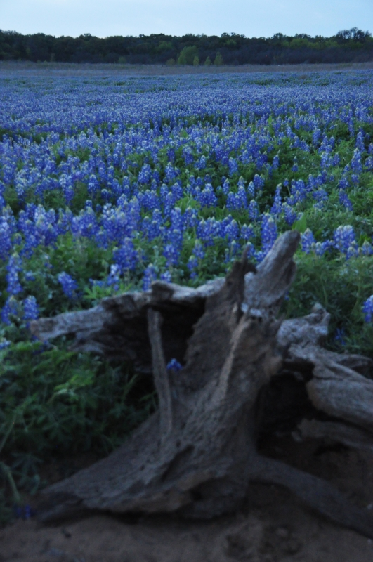 Bluebonnet Beach