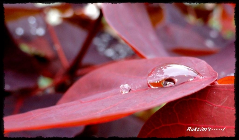 The World Confined In A Droplet Of Water!!