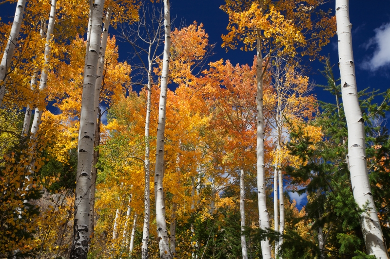 Aspen Grove North