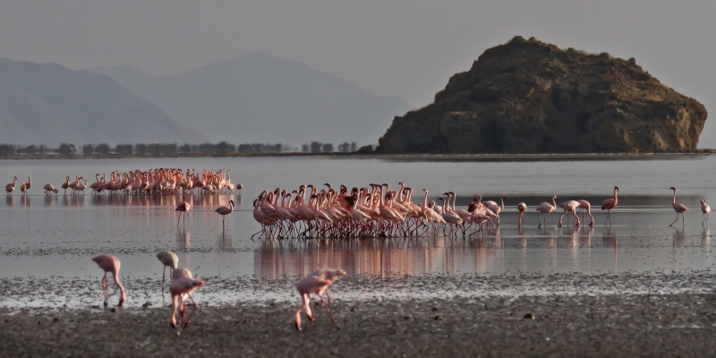 Flamingo Love Parade, Lake Natron