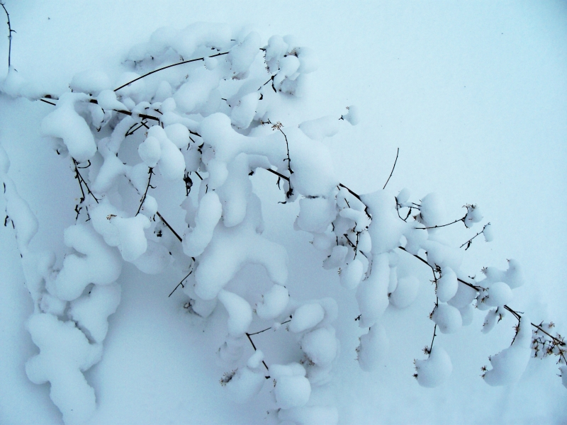 Snowy Tree Branch