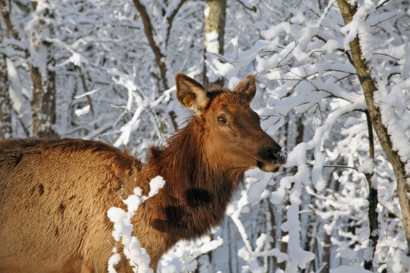 Late March Snowfall – Lone Elk Park