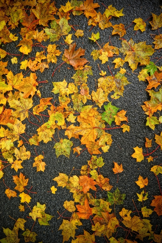 Asphalt And Leafs