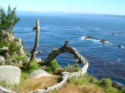 Point Lobos Driftwood