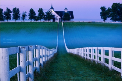 Horse Farm In Early Morning
