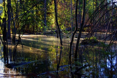 Setting Sun Paints A Picture On The Murky Swamp Water