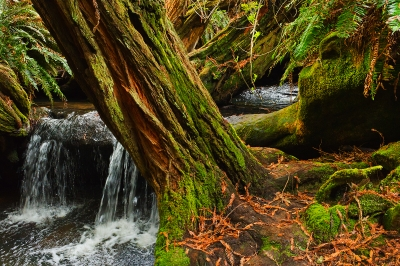 Salal Trail Waterfall