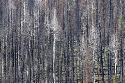 One Year After The Burn: Still Standing Tall