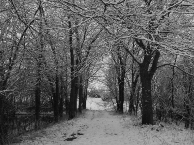 Winter Walkway