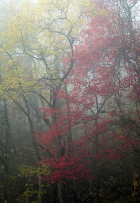 Colors In The Fog