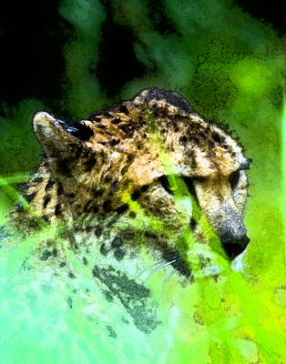 Cheetah Abstract