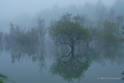 Morning Fog And Reflections, Waterbury Center State Park, Vt