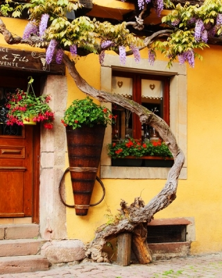 Wisteria And Yellow Wall