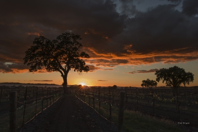 Sunset Over Wine Country