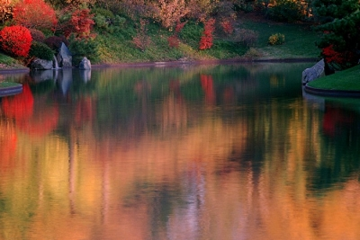 Autumn Reflections In A Japanese Garden
