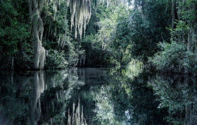 Okefenokee Swamp Mirrored Reflections