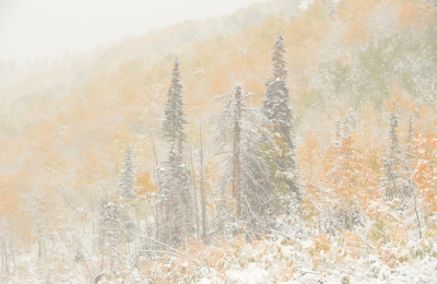 Fall Colors And Early Snowstorm