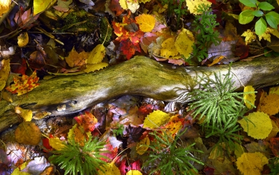 Forest Floor Tapestry