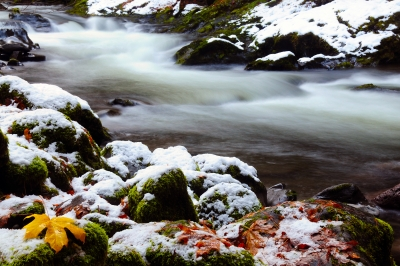 Snowfall On The Salmon River