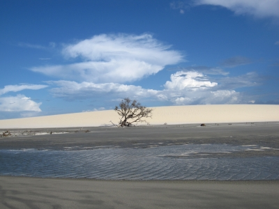 Sand, Blue Sky And The Tree