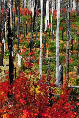 Autumn Afater The Forest Fire