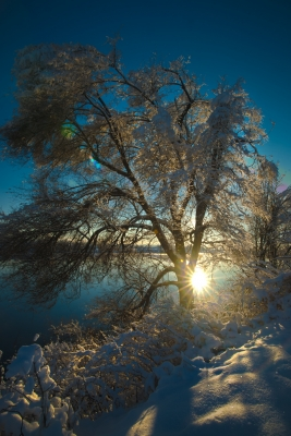 Tree Of Cold