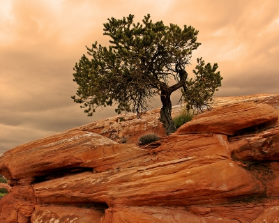 Red Rock Survivor – Arches National Park