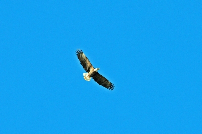Soaring In Clear Sky