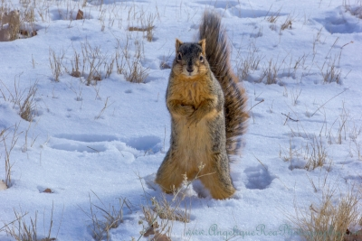 Psst, Hey, You Got Mittens For A Squirrel?