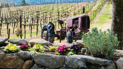 Spring In Wine Country