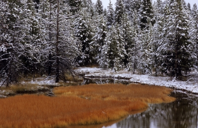 Pond In Early Snow