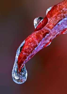Cold Red Leaf