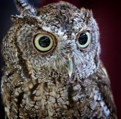 My, What Big Eyes You Have!