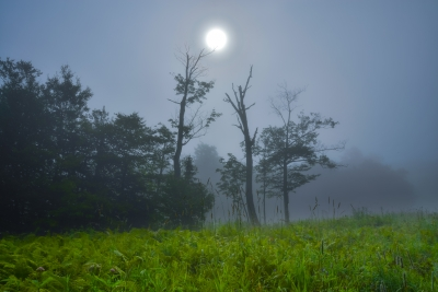 Of Fog And Light