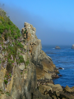 Point Lobos Valley View