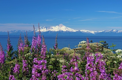 Mt. Mckinley From The Kenai Peninsula