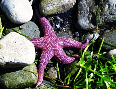 Starfish On The Homer Spit