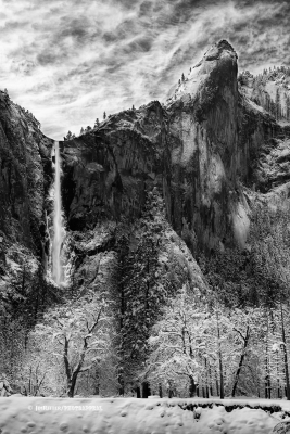 Wolf Of Bridalveil Falls