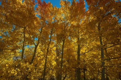Golden Fall