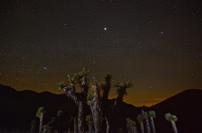 Joshua Trees Witness Another Night