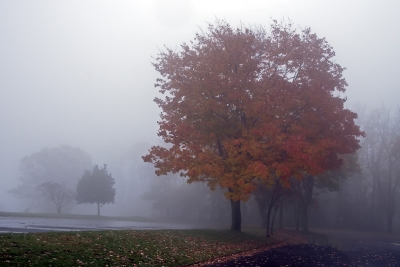 Shenandoah Fog Color
