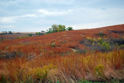 Colorful Prairie