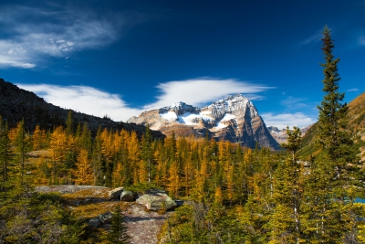 Fall Larches