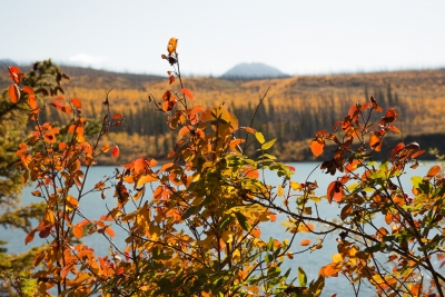 Fall At Talbot Lake