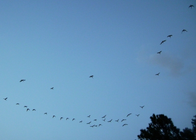 Birds Flying Away