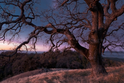 Dawn At Henry Coe State Park